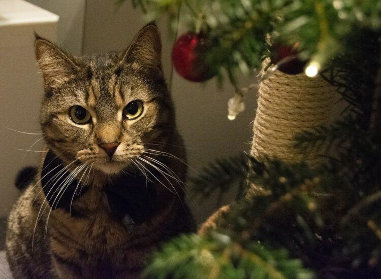 Vira ved siden av sitt lille juletre