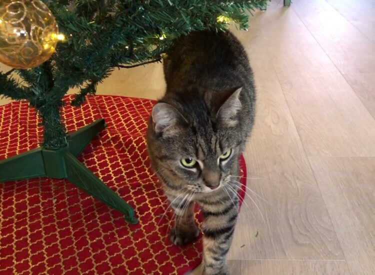 Vira and the Yule tree