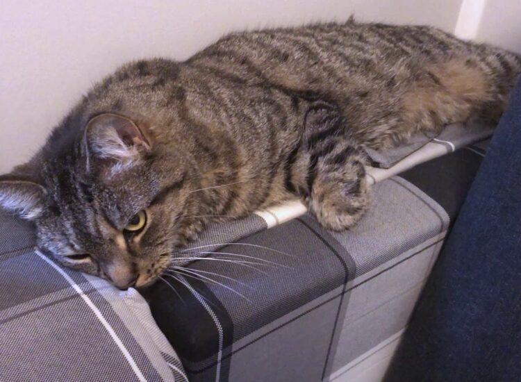 Vira seems depressed